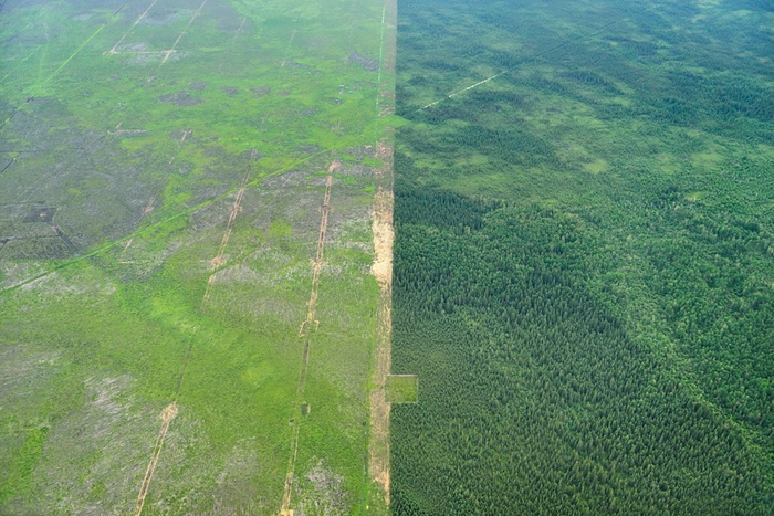 Mildred Lake Extension: Forest-clearing, as part of a process known as overburden removal, in preparation for the expansion of the North Mine (Image: L. Helbig)
