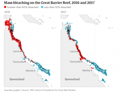 Great Barrier Reef at 'terminal stage': scientists despair ...